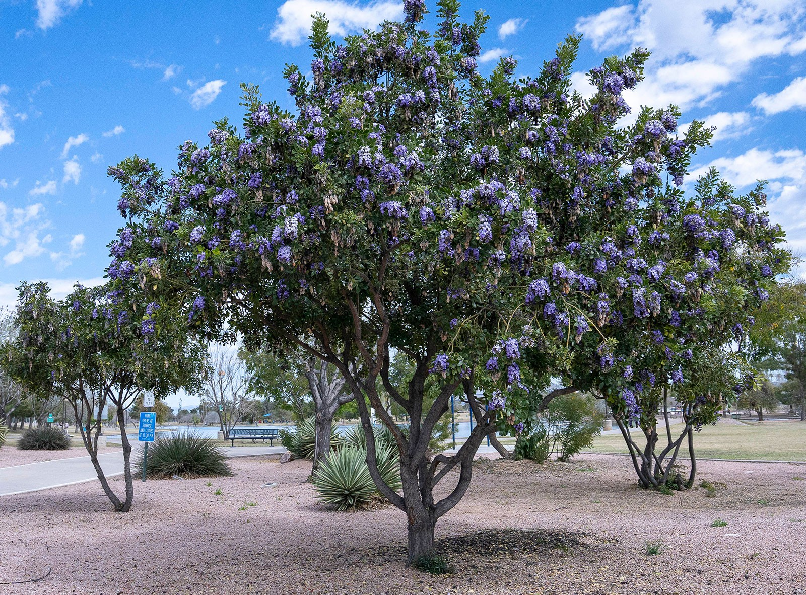 Plants Amwua