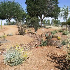 Chandler Xeriscape Demonstration Garden