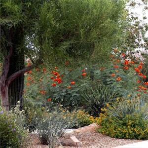 Avondale Xeriscape Demonstration Garden