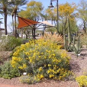 Peoria Desert Fusion Garden