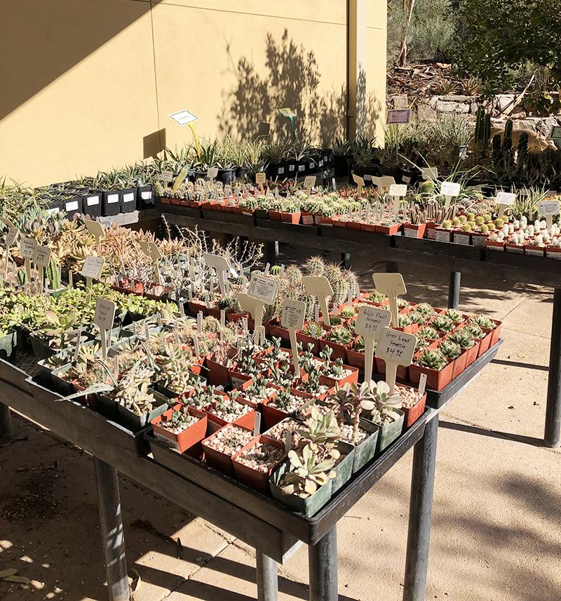 2.21 Plant Sale 2
