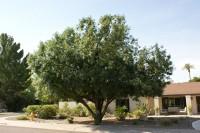 CW LAND BIG TREE CROPPED